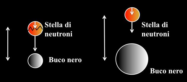 Fig. 5: Se il buco nero ha una massa relativamente piccola, allora la stella di neutroni può avvicinarsi molto al buco nero, sentire una grande differenza di gravità e rompersi prima di oltrepassare il punto di non ritorno. Se invece la massa del buco nero è maggiore di un valore critico, la stella di neutroni si rompe solo all'interno della superficie di non ritorno, e niente sfugge. La stella viene mangiata in un sol boccone.